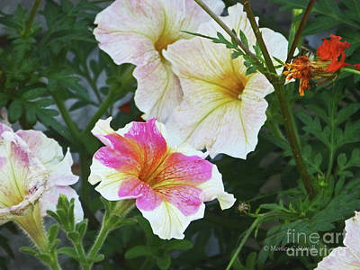 Photograph - Color Combination Flowers Cc69 by Monica C Stovall