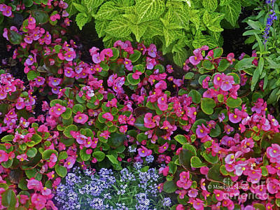 Photograph - Color Combination Flowers Cc73 by Monica C Stovall