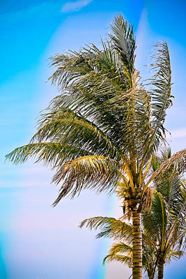 Photograph - Color Drenched Palm Trees by Colleen Kammerer