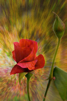 Color Explosion - Rose - Floral Art Print by Barry Jones