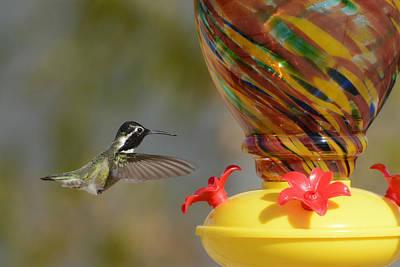 Photograph - Color Fiesta 3 by Fraida Gutovich