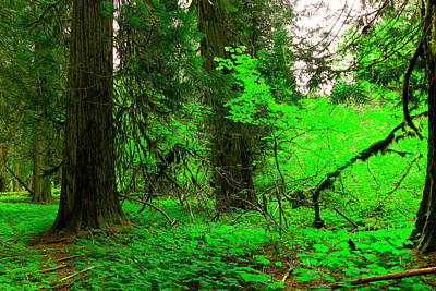 Color In The Forest  Art Print by Jeff Swan