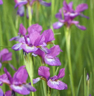 Photograph - Color In The Garden by Kim Hojnacki