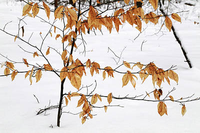 Photograph - Color In The Snow by Mary Bedy