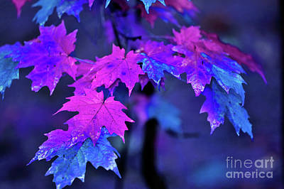 Maple Leaf Art Photograph - Color Me... by Betty LaRue