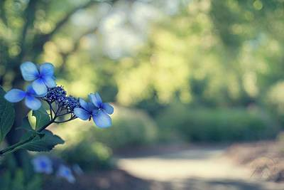 Photograph - Color Me Blue by Gene Garnace