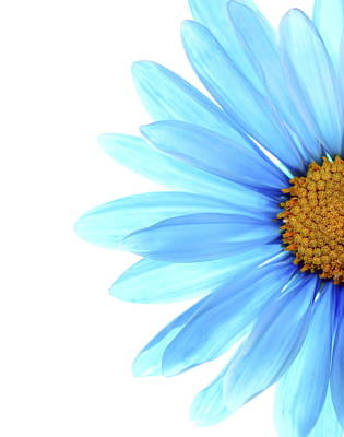 Daisy Photograph - Color Me Blue by Rebecca Cozart