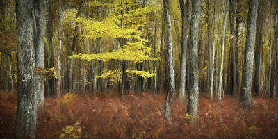 Photograph - Color Me Fall by Eduard Moldoveanu