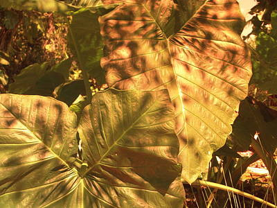 Photograph - Color Me Fall by Florene Welebny