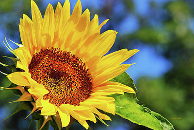Color Me Happy Sunflower Art Print
