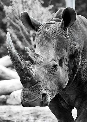 Photograph - Color Me Rhino by John Haldane