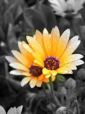Abtract Digital Art - Color My Petals by Amanda Eberly-Kudamik