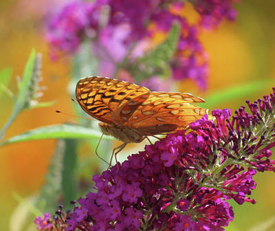 Photograph - Color Of My World - Butterfly by MTBobbins Photography