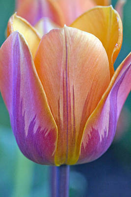 Photograph - Color Of Spring by James Steele