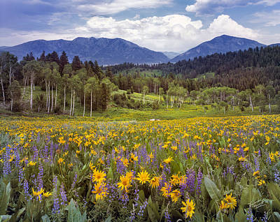 Fields Of Flowers Photograph - Color Of Spring by Leland D Howard