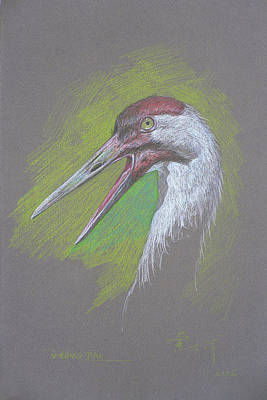 Drawing - Color Pencil Painting - Egret #1845 by Hongtao Huang