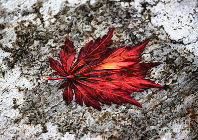 Photograph - Color Spot Leaf by Erica Hanel