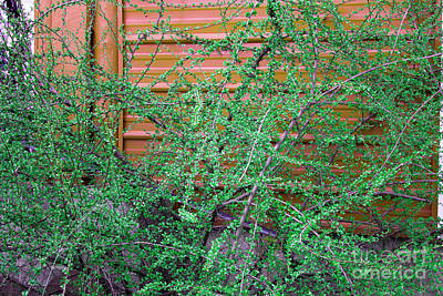 Photograph - Color Study Rust And Green by Donna Munro