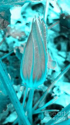 Photograph - Color Trend Blue Bud by Rachel Hannah