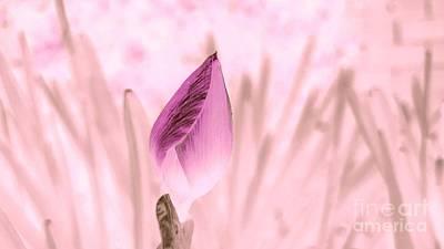 Photograph - Color Trend Flower Bud by Rachel Hannah