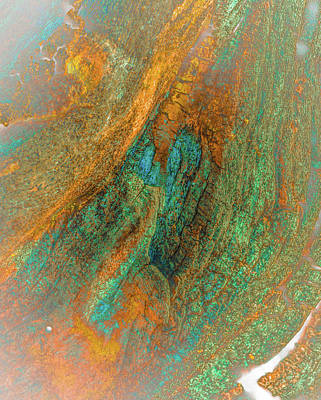 Photograph - Color Vein Bark Abstract by Bruce Pritchett