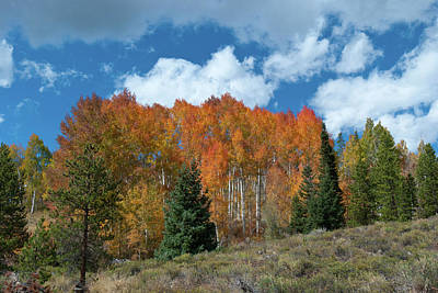 Photograph - Colorado Aspen Brilliance by Cascade Colors