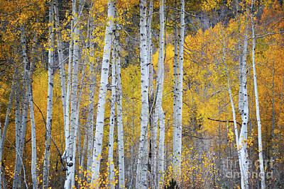 Photograph - Colorado Aspen Trees Foliage Woodland Landscape by Andrea Hazel Ihlefeld