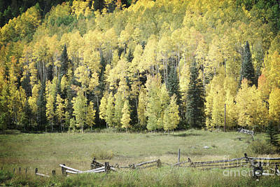 Photograph - Colorado Aspen Trees Rustic Fence by Andrea Hazel Ihlefeld