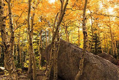 Photograph - Colorado Aspens by Ben Graham