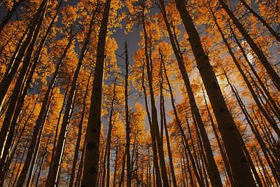 Photograph - Colorado Aspens by Erica Kinsella