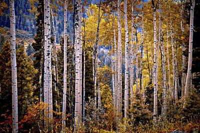 Photograph - Colorado Aspens by Linda Unger