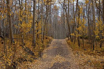 Photograph - Colorado Autumn Aspen And Road by Cascade Colors