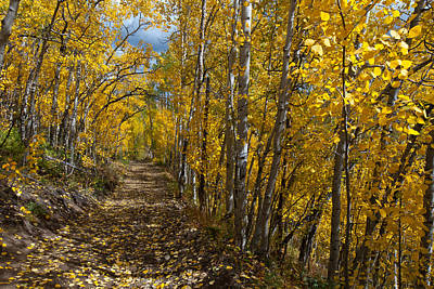 Photograph - Colorado Autumn Aspen Forest by Cascade Colors