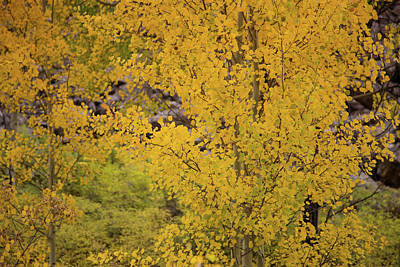Photograph - Colorado Autumn Colors by Kunal Mehra
