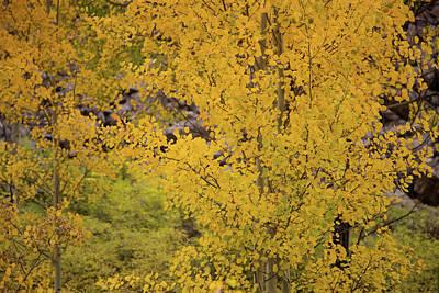 Photograph - Colorado Autumn Colors by Kunal Mehra