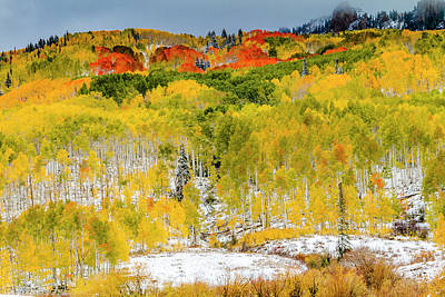 Photograph - Colorado Autumn Colors With Snow by Teri Virbickis