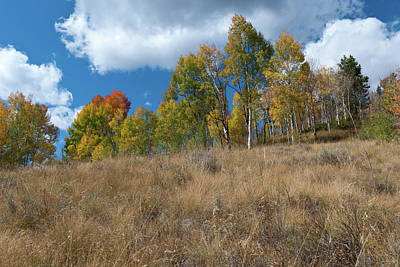 Photograph - Colorado Autumn Meadow With Aspen by Cascade Colors