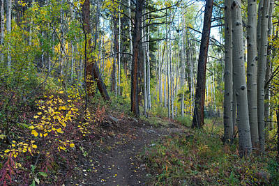 Photograph - Colorado Autumn Mixed Pine And Aspen Forest by Cascade Colors