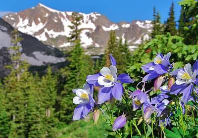 Photograph - Colorado Blue Columbine by Cascade Colors