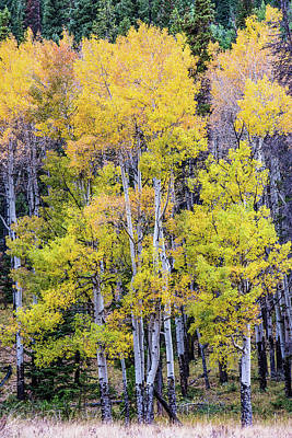 Photograph - Colorado Color by Greg Wyatt