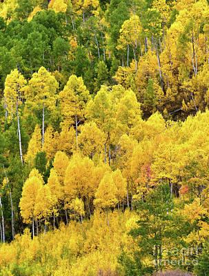 Colorado Colors Art Print