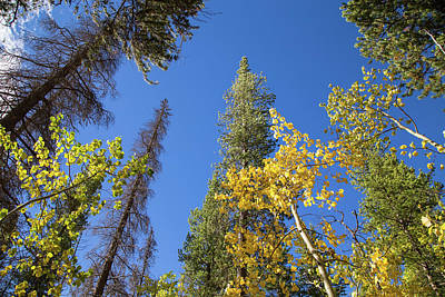 Photograph - Colorado Fall Colors by Kunal Mehra