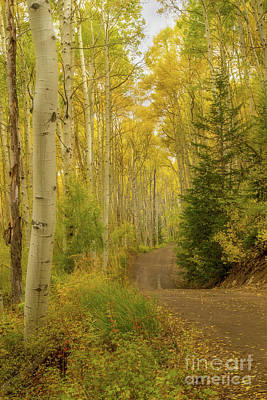 Photograph - Colorado Fall Dirt Road by Ronda Kimbrow