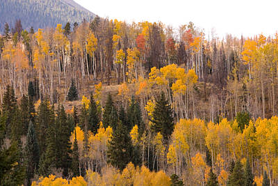 Colorful Trees Photograph - Colorado Fall Foliage by James BO  Insogna