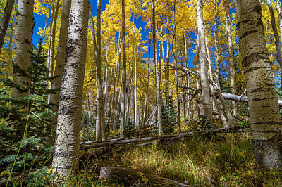 Photograph - Colorado Fall Hike In The Aspens by Michael J Bauer