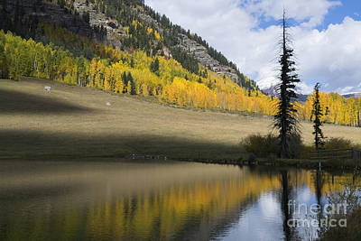 Durango Photograph - Colorado Fall Reflections by Jerry McElroy