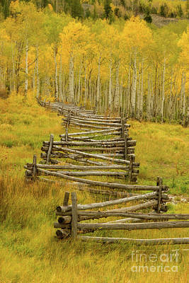 Photograph - Colorado Fall Split Rail Fence by Ronda Kimbrow