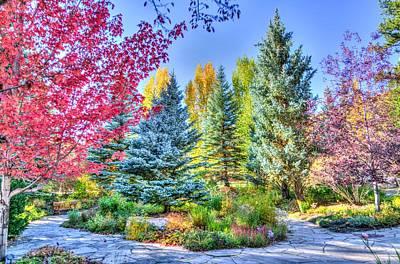 Photograph - Colorado Forest In Technicolor by Autumn Scenes