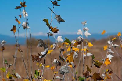Photograph - Colorado Front Range Autumn Detail by Cascade Colors