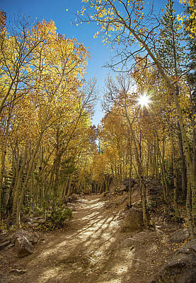 Photograph - Colorado Gold by Tim Stanley